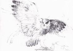 .:Owl:. by ChristinaMandy