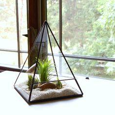 Terrario plantador de la pirámide de cristal con planta de