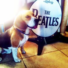 """The Beagles"""