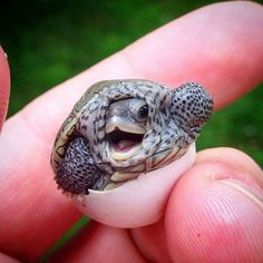 Welcome little turtle #cute #pets #cutepets #pet #babblepets