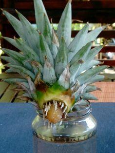 Indoor Plants, Pineapple, Fruit, Food, Inside Plants, Pine Apple, Essen, Meals, Yemek