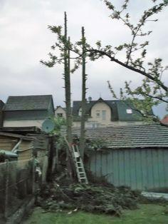 Baum fällen in Stücken