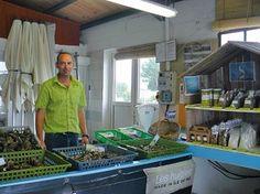 L'escale du marais, dégustation d' huître à La Couarde