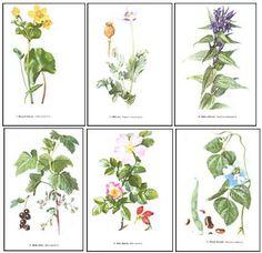 Plevele polí a zahrad, Illustration, Plants, Google Search, Buxus, Illustrations, Plant, Planting, Planets
