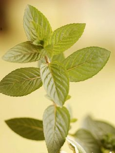 Mint is wonderful anywhere in a yard.  It is pretty aggressive, which I don't mind at all.  Smells awesome when we've run the lawnmower around the edges without cutting them all down.  Pick a few leaves to freshen your breath or put in tea.