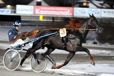Nu Pagadi - one of the coolest looking Standardbreds I've ever seen.