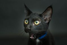 Woman Photographs Black Shelter Cats To Help Them Get Adopted