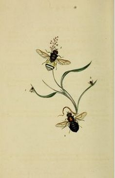 ≗ The Bee's Reverie ≗  twin bees
