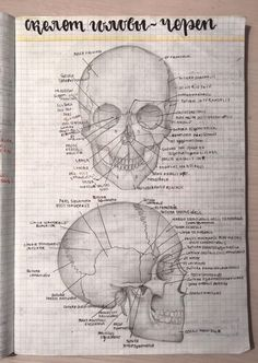 School Motivation, Study Motivation, Human Body Diagram, Human Skeleton Anatomy, Biology Art, Science Notes, Study Organization, Medical Anatomy, Pretty Notes