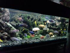 27 Best Aquarium Fish Tank Decoration Images Aquarium Aquarium