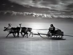 Sebastião Salgado. on the ice