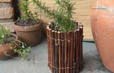 A Guide to Vines and How to Vine Beauty with Your Garden Bamboo Planter, Bamboo Fence, Planter Pots, Bamboo Crafts, Planting Roses, Garden Borders, Small Gardens, Garden Projects, Boho Decor