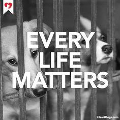 Every life matters. http://iheartdogs.com