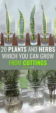 Easy Garden, Lawn And Garden, Indoor Water Garden, Garden Bed, Edible Garden, Home Vegetable Garden, Herb Garden Pallet, Gutter Garden, Raised Vegetable Gardens