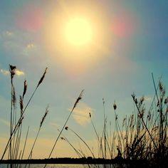 """""""La luz que enceguece nuestros ojos es oscuridad para nosotros. Sólo alborea el día para el cual estamos despiertos. Hay aún muchos días por amanecer. El sol no es sino una estrella de la mañana."""" Henry David Thoreau"""