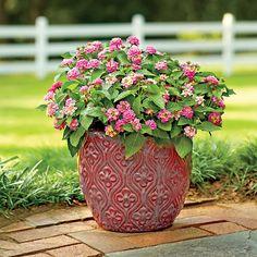 Meet Miss Lantana - Spectacular Container Gardening Ideas - Southern Living