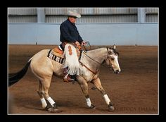 1000 Images About Reining Ref On Pinterest Reining