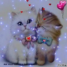 Süß: Daizo und Janna💞👫 - New Ideas Beautiful Love Pictures, Beautiful Gif, Cute Pictures, Cute Baby Animals, Animals And Pets, Kittens Cutest, Cats And Kittens, Image Chat, Cat Wallpaper