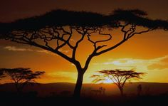 Una leyenda africana cuenta la historia de una niña llamada Ayana, la cual descubrió una forma muy particular de comunicarse con su madre muerta. Era una niña dulce y delicada, pero que no tenía ni un solo amigo con quien platicar. Sólo contaba con un...