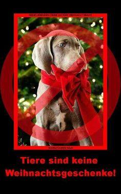 Keine Tiere unterm Weihnachtsbaum