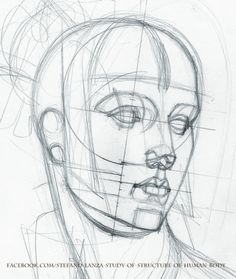 https://www.facebook.com/Stefano-Lanza-Study-of-structure-of-human-body-1479159998770051/ #anatomy #head #drawing #draw #math