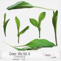 Green Mix Vol. 6 by Lara's Digi World | Digital Scrapbooking Element Packs Site Design, Tool Design, Elements Of Art, Digital Scrapbooking, Plant Leaves, Digital Art, World, Green, Commercial