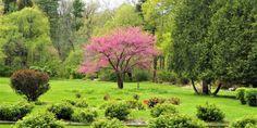 Friendship Botanic Gardens - PanoramaNOW Entertainment News Indiana Dunes, Michigan City, Washington Park, Garden Park, Formal Gardens, Botanical Gardens, Friendship, Country Roads, Entertainment