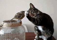 28 Gifs Of Cats Just Being Cute   CutesyPooh