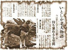 FOTOS REALES Hachiko - Hachi, Hachiko, TIJUANAANTITAURINO, NO MAS ANTIRRABICOS Dog Stories, True Stories, Hachiko Dog, Hachi A Dogs Tale, A Dog's Tale, Japanese Akita, The Loyal, Akita Dog, Loyal Dogs