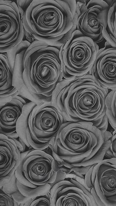 you were my letters, it would cloud the color of my roses. Rose Background, Flower Background Wallpaper, Flower Phone Wallpaper, Wallpaper Iphone Cute, Flower Backgrounds, Phone Backgrounds, Wallpaper Backgrounds, Iphone Wallpaper, Grey Rose Wallpaper