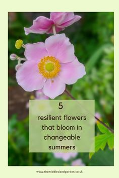 5 perfect flowers for your garden or backyard that will survive whatever the weather #middlesizedgarden Low Maintenance Garden Design, Garden Privacy, Rose Varieties, Invasive Plants, Cottage Garden Plants, Colorful Garden, Easy Garden, Cool Plants, Small Gardens