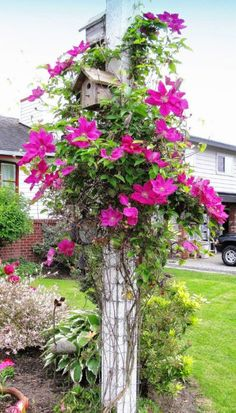 Clematis on Birdhouse | Backyards Click