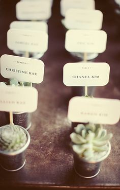 Succulent Placecards - I was totally thinking about doing something like this. It's great to visualize what it might look like.