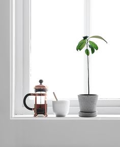 17 MAY Only Deco Love: My avocado tree : 12 weeks old Nordic Interior, Interior Styling, Lawn And Garden, Home And Garden, Growing An Avocado Tree, Avocado Plant, Japanese Home Decor, Up House, Plant Shelves