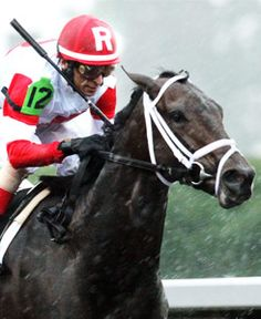We Miss Artie 2014 Kentucky Derby Contender
