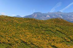 El Peña Labra arropado por un manto amarillo en el parque natural fuentes carrionas y fuente cobre en la montaña palentina.