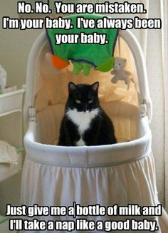 baby is cat in crib