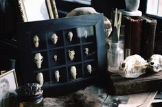 The Goth Hipster | ladylockslife: Now on etsy!!!! Small Specimen...