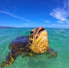 Sea Turtle Selfie