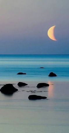 ✯ Moon - 寒潭月采集到且于喧嚣之末,静观繁华舞落。 - 花瓣