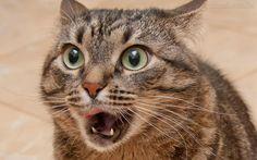 bob esponja assustado de boca aberta - Pesquisa Google