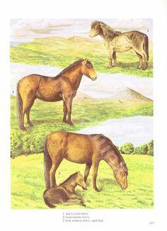 VINTAGE HORSE PRINT Animal Print Shetland Pony Horse by GinAndJunk Pony Horse, Vintage Horse, Horse Print, Vintage Coffee, Antique Books, Vintage Prints, Pretty Pictures, Moose Art, Dartmoor