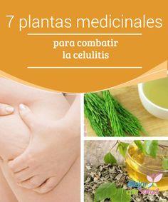 """7 plantas medicinales para combatir la celulitis  La celulitis es una de las """"pesadillas"""" de las mujeres. Estos pequeños hoyos que aparecen en los muslos, las piernas y otras partes del cuerpo se convierten en el terror femenino."""