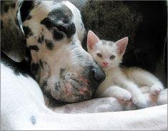 .Best friends