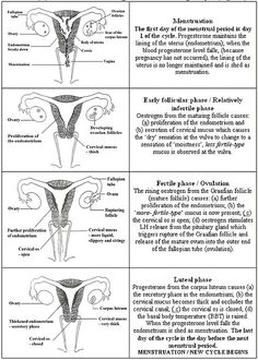 menstrual cycle worksheets google search 4th quarter nursing pinterest menstrual cycle. Black Bedroom Furniture Sets. Home Design Ideas