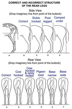 Things to look at when assessing horses- good conformation a must! Bad conformation=issues                                                                                           Mehr