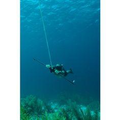 Reef Surfer EDGE|Preis:$634.08|www.3sails.eu Fish, Water, Animals, Self, Gripe Water, Animales, Animaux, Pisces, Animal