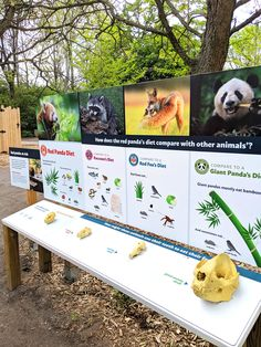 This is a much nicer way to display our skulls. May need to be adapted so that the skulls don't get damaged though. Zoo Signage, Signage Design, Red Panda Diet, Fox Diet, Unique Animals, Cute Animals, Detroit Zoo, Environmental Design, Red Fox