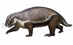 A mammal fossil, coined the 'crazy beast', has been unearthed in Madagascar. This bizarre species once roamed the Earth with dinosaurs. Madagascar, Armadillo, Adam Devine, Les Reptiles, Grand Tour, Weird Creatures, Sea Creatures, Vertebrates, Like Animals