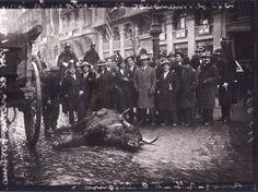 Toro muerto en la Gran Via por el torero Fortuna.24 enero 1927.(Alfonso)